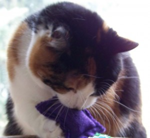 Winni loves her catnip toys.