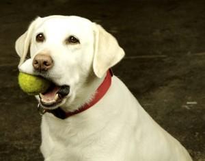 dogtennisball