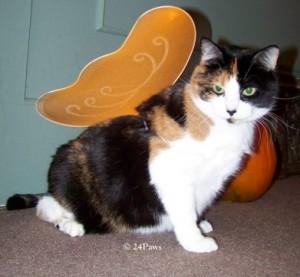 Winni is a fairy for Halloween.