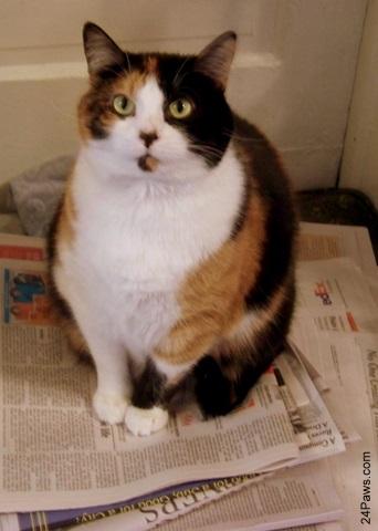 Winni, a cat, sits atop a pile of newspaper.