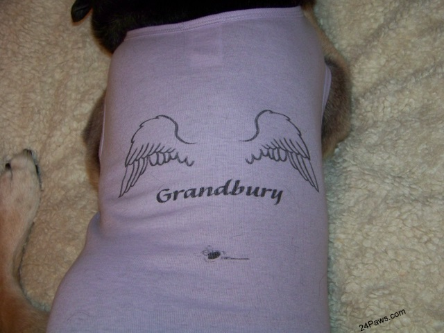 Grandbury, a member of the 24Paws pack, wears a winged tee