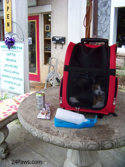 Winni in her cat carrier.