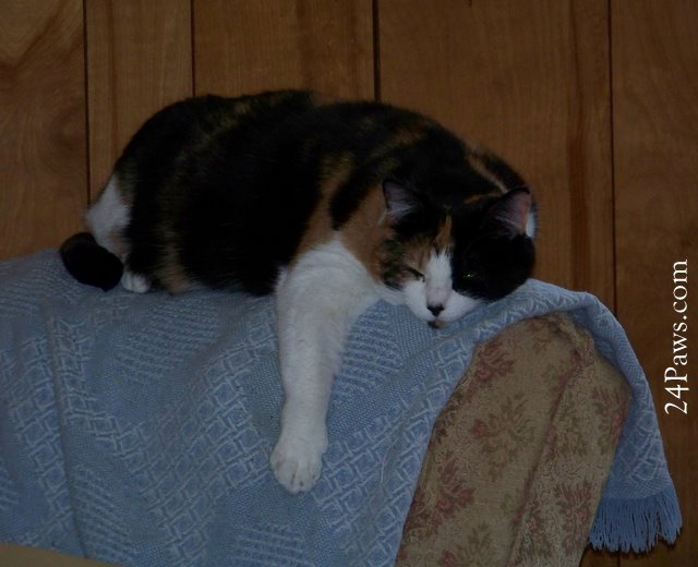 Photo of a cat sleeping on the back of a rocker.