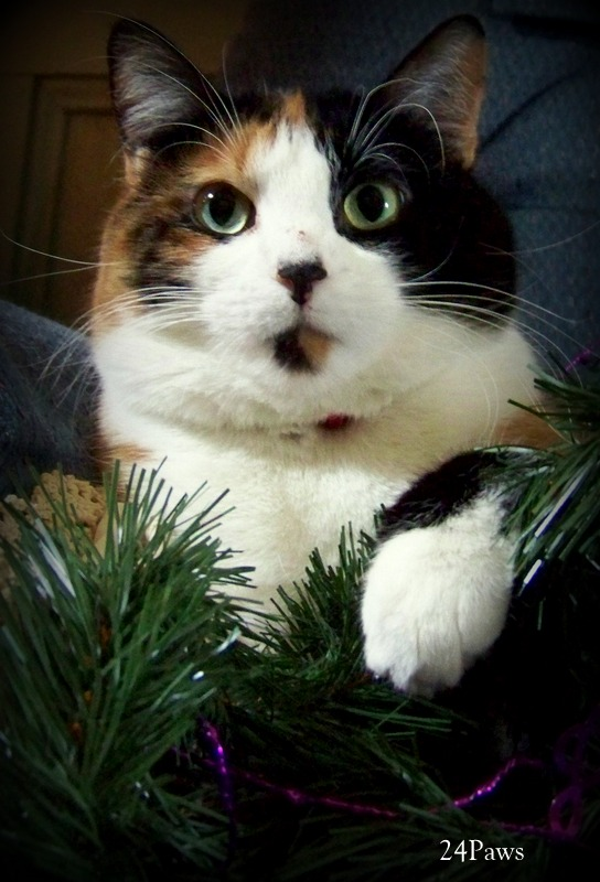 Photo of cat with holiday garland.