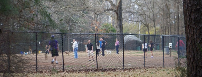 People and dogs at the dog park.