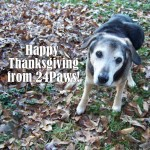 Grandbury, of 24Paws, wishing you Happy Thanksgiving.