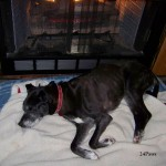 dog lying in front of the fire